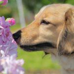 犬で癌検知