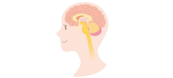 脳の仕組みを理解して、香りがなぜ人生を変えるほどの力を持つかを知る